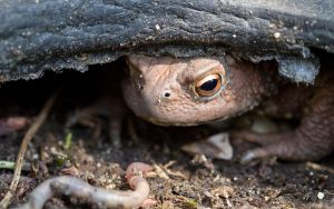 Toad's Mealtime by The-Aperture