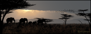 Evening on the Serengeti by jbjdesigns