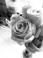 Black and white roses by Laura-in-china