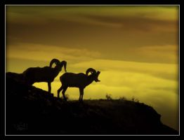 Mountain_Sheep by katsabrat