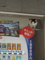 vending machine cat by THE-EGO