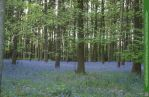 Glades of Blue 5 UNRESTRICTED by Elandria