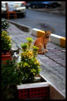 cats of the neighbourhood by firatoz