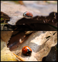 Lady.Bug by Doix