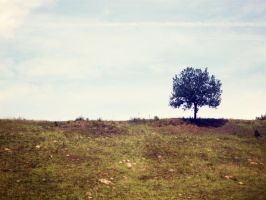 Lonely Tree 11 by JustMe255