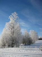 winter5 by Fune-Stock