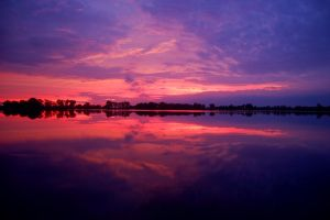 Magenta Magnificence by AndersonPhotography