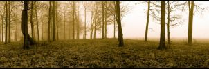 Panoramic trees in sepia, framed.img694 1 2 by harrietsfriend