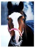 Pretty horse by NewForestPhotography