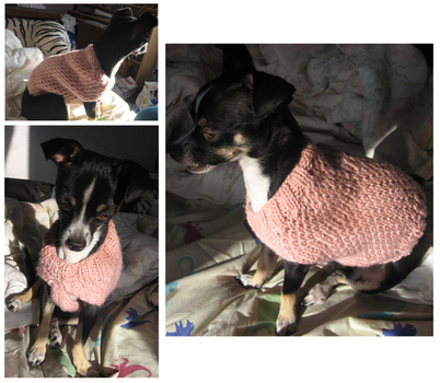 Knitted Dog Sweater by Amif