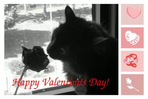 Valentine card 2 from Dusty by jenny-in-ga