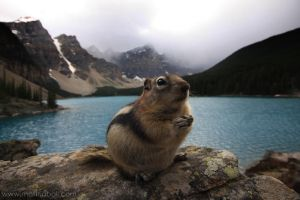 Moraine Lake Chipmunk by mattTIDBALL