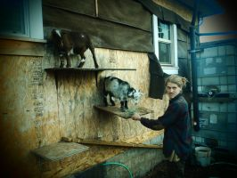 Goat Shelves by ArcaneAffliction