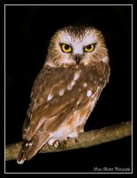 Hoo are you looking at? by seanbeckettvt