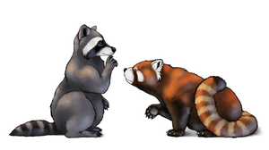 How to draw red pandas and raccoons by LadyAway