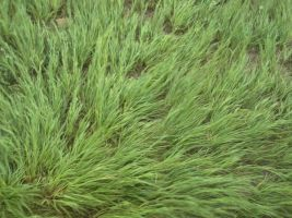 grass by thomas4863