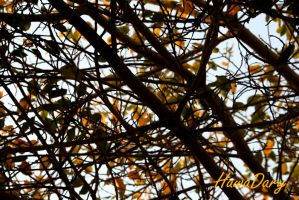 Les Feuilles Mortes by HawaDary