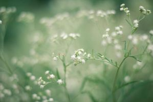 Flowers and Bokeh by TiRiSh