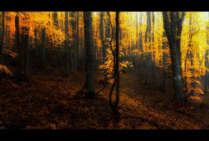 Full of autumn by Bojkovski