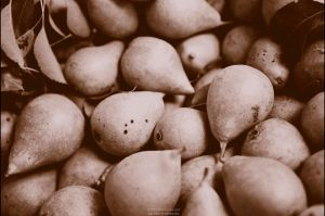 Pears by OliverJules