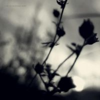Quiet life by PiaG