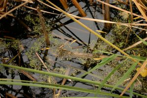 Plants in water by nwalter
