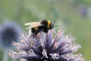 BumbleBee 2 by wuestenbrand