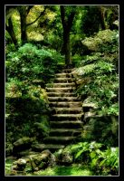 STOCK - Woodland Staircase by AmethystUnderwood
