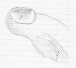 Barn Owl sketch by OkapiSnowlio