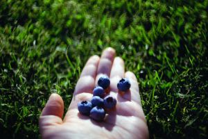 blueberries. by BlackDennie