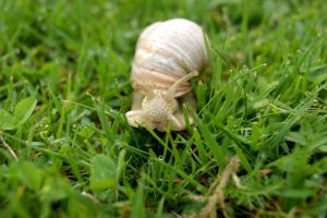 Mr snail by Hindorf