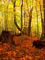 Autumn near Marquette by orographic