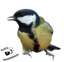 Cut-out stock PNG 05 - titmouse by Momotte2stocks