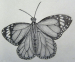 Butterfly Sketch by KrissyM0922