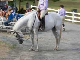 Horse show stock 10 by shush-stock