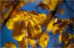 Autumn 2011... _58 by my-shots