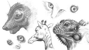 Animal Sketches 02 by senimation