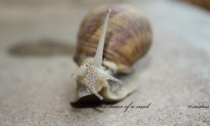 last dance of a snail by cristusdeath