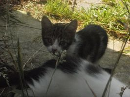 Tabby in the Garden (2) by emmys-stock