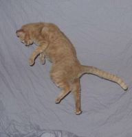 Cat Stock: Falling 5 by Stock-By-Crystal