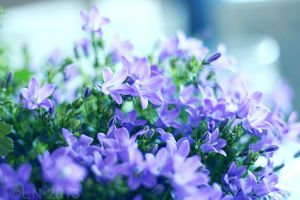 Easter flowers by Misspic