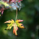 my local nature 10-18_02 by EvaShoots