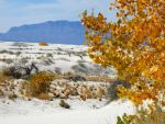 Cottonwood and White Sands by SharPhotography