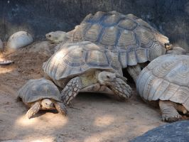 Tortoise Turtle Stock 5 by FantasyStock