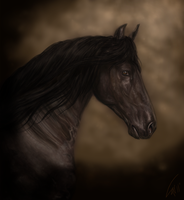 Friesian Portrait by stalit