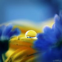 through the flowers. by simoendli
