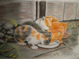 kittens from a photograph by POLISHhedgieFanGirl