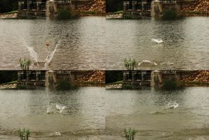Skipping Stone Sequence by RavenousDrake