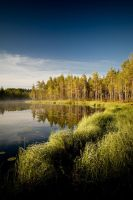 Forrest pond by juhku