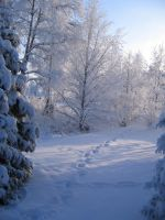 My Winter Wonder Land by The-Only-Myself